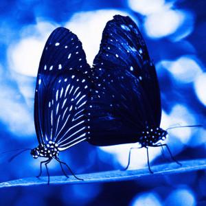 28-farfalle